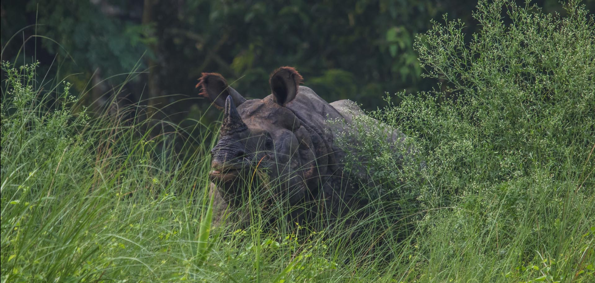 One Horned Rhino spotted during Chitwan Jungle Safari